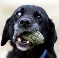 Dog holding grenade